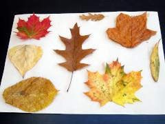 Leaf creatures step 1