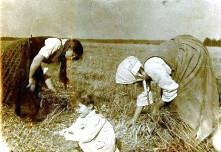 Woman gleaning corn from a field margin